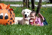 Дрессировка и воспитание собак. Ветеринар.