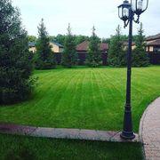 Рулонный газон от ландшафтного центра Клен